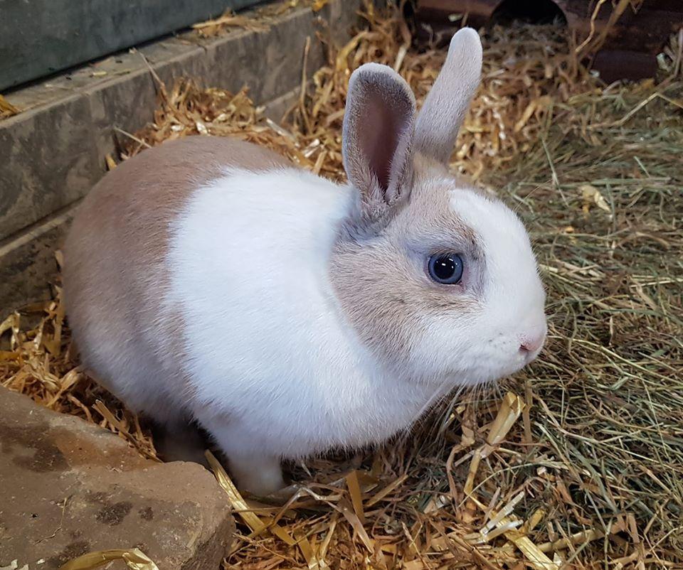 Kaninchen Im Tierheim Abgeben